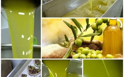 Zeytinyağı Nasıl Tüketilmeli
